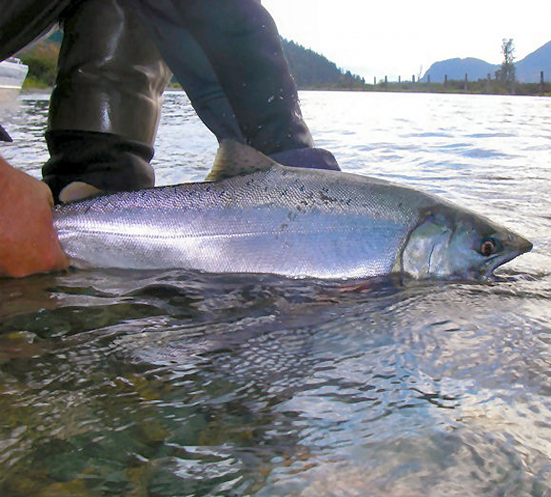 On The Water Salmon Harrison River <P>